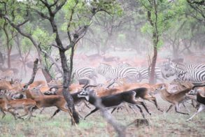 Rebellions, soldiers made wild animals leave S Sudan – official